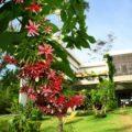 Modern Luxury Villa Koh Lanta