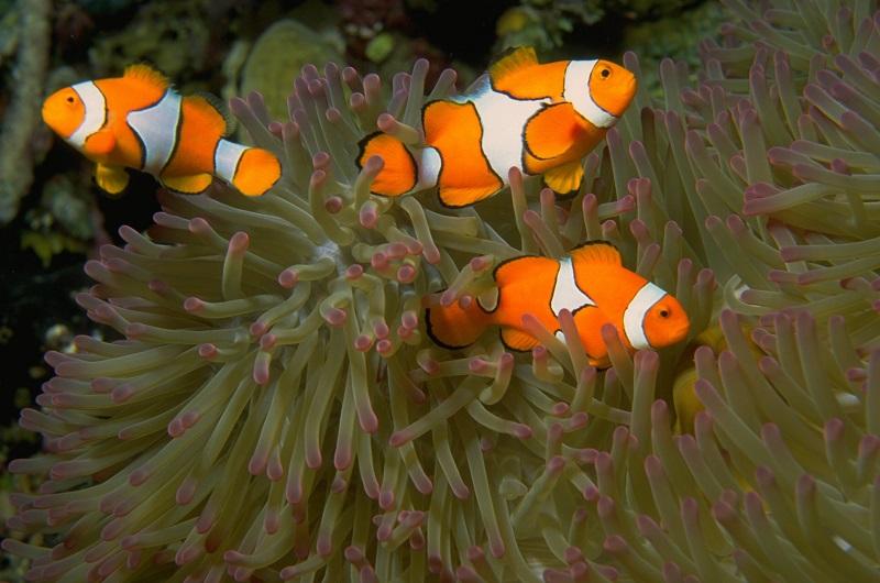 Diving Koh Lanta