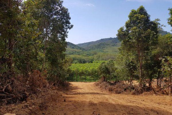 Koh Lanta Land Plots